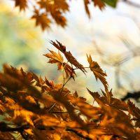 Afvallen in de herfst met gezonde groenten